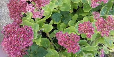 Подскажите название растения. Как сажать и ухаживать?