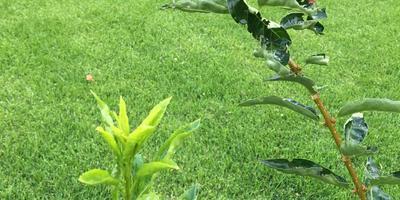 Помогите определить заболевание растений в саду. Как лечить и проводить профилактику?
