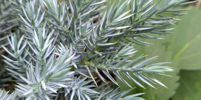 Подскажите название растения