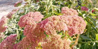 Что за растение и как его рассадить?