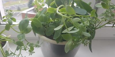 Что за растение такое?