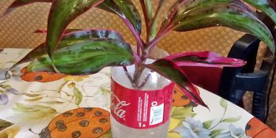Скажите, пожалуйста, как называются эти растения? Каковы условия содержания и разведения?