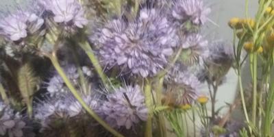 Что за цветы? Помогите определиться