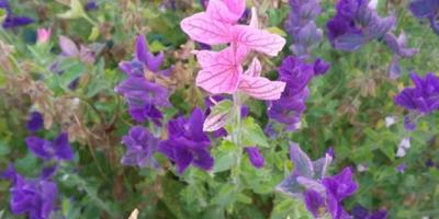 Подскажите, пожалуйста,  как называются эти цветы?