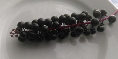 Что за ягода на фотографии? Помогите, пожалуйста, определить!