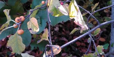 Помогите, пожалуйста, определить незнакомые растения