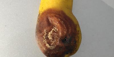 Помогите вылечить грушу от неизвестного заболевания