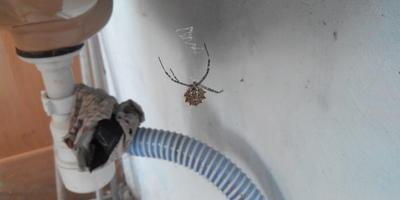 Что за паук?