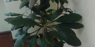 Подскажите, что это за растения?
