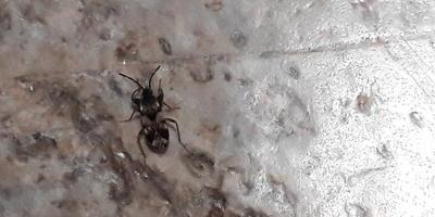 Подскажите, что за жук в доме из бруса?