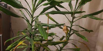 Подскажите, что за растение? Как за ним ухаживать?