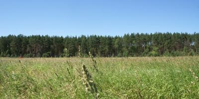 Фотографии и отзывы о коттеджном поселке «Максимовка» (Воскресенский р-н МО)