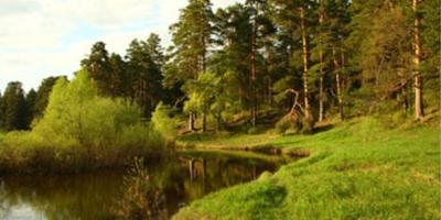 Фотографии и отзывы о коттеджном поселке «Зиброво» (Серпуховский р-н МО)