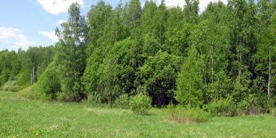 Фотографии и отзывы о коттеджном поселке «Тверитино» (Серпуховский р-н МО)