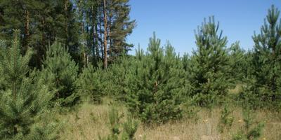 Фотографии и отзывы о коттеджном поселке «Иванов лес» (Орехово-Зуевский р-н МО)