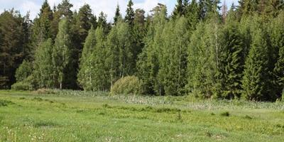 Фотографии и отзывы о коттеджном поселке «Гавань» (Солнечногорский р-н МО)