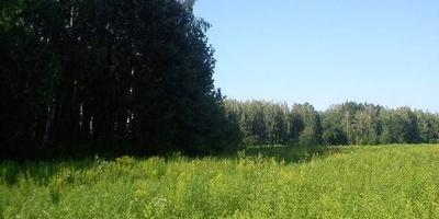 Фотографии и отзывы о коттеджном поселке «Знаменка» (Можайский р-н МО)