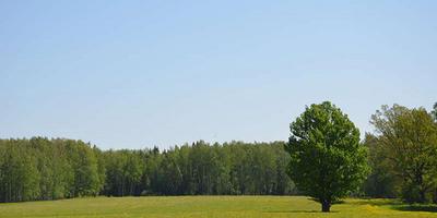 Фотографии и отзывы о коттеджном поселке «Тиерра-Вилладж» (Чеховский р-н МО)
