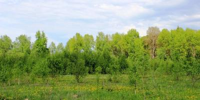 Фотографии и отзывы о коттеджном поселке «Лесная губерния» (Можайский р-н МО)