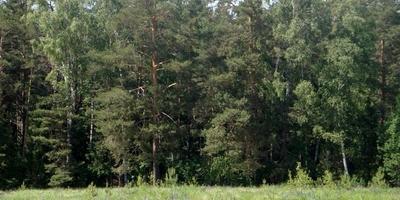 Фотографии и отзывы о коттеджном поселке «Кудиново-Люкс» (Ногинский р-н МО)
