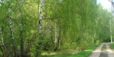 Фотографии и отзывы о коттеджном поселке «Легенда» (Домодедовский р-н МО)