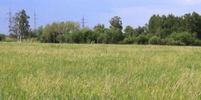 Фотографии и отзывы о коттеджном поселке «Пчелка» (Мытищинский р-н МО)