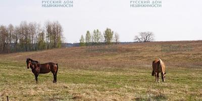 Фотографии и отзывы о коттеджном поселке «Рогатино и Соголево» (Клинский р-н МО)