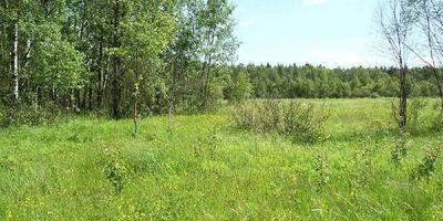 Фотографии и отзывы о коттеджном поселке «Шмелево» (Раменский р-н МО)