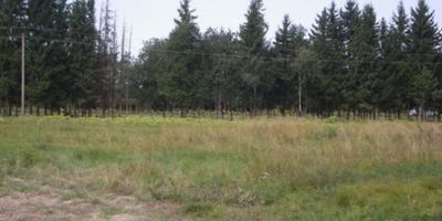 Фотографии и отзывы о коттеджном поселке «Елизавета» (Гатчинский р-н ЛО)