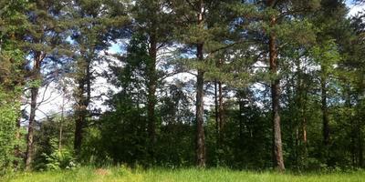 Фотографии и отзывы о коттеджном поселке «Варколово» (Всеволожский р-н ЛО)