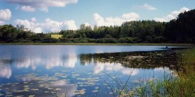 Фотографии и отзывы о коттеджном поселке «Речной Бобр» (Лужский р-н ЛО)