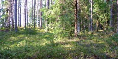 Фотографии и отзывы о коттеджном поселке «Лесная Дача» (Выборгский р-н ЛО)