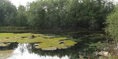 Фотографии и отзывы о коттеджном поселке «Три ручья» (Ломоносовский р-н ЛО)