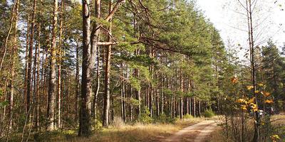 Фотографии и отзывы о коттеджном поселке «Колокольцево» (Приозерский р-н ЛО)