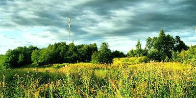 Фотографии и отзывы о коттеджном поселке «Пухоловские сады» (Кировский р-н ЛО)