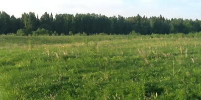 Фотографии и отзывы о коттеджном поселке «Поместье Алексеевское» (Ломоносовский р-н ЛО)