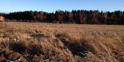Фотографии и отзывы о коттеджном поселке «Лангерево» (Ломоносовский р-н ЛО)