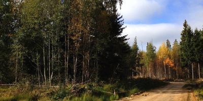 Фотографии и отзывы о коттеджном поселке «Приморье» (Выборгский р-н ЛО)
