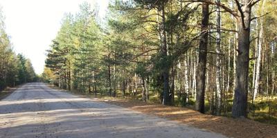 Фотографии и отзывы о коттеджном поселке «Борисова Грива» (Всеволожский р-н ЛО)