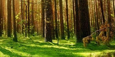 Фотографии и отзывы о коттеджном поселке «Карасаари» (Приозерский р-н ЛО)