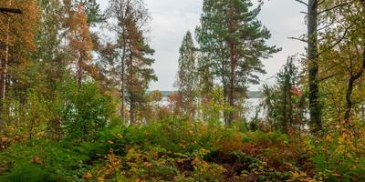 Фотографии и отзывы о коттеджном поселке «Karelia Holiday Park» (Выборгский р-н ЛО)