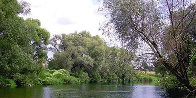 Фотографии и отзывы о коттеджном поселке «Малиновка 3» (Выборгский р-н ЛО)