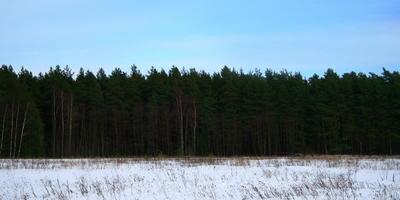 Фотографии и отзывы о коттеджном поселке «Ёлкино» (Раменский р-н МО)