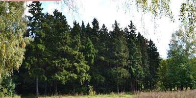 Фотографии и отзывы о коттеджном поселке «Исаковские дачи» (Ногинский р-н МО)