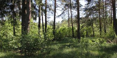Фотографии и отзывы о коттеджном поселке «Ильинка» (Раменский р-н МО)