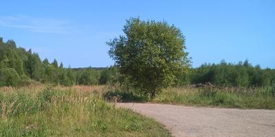 Фотографии и отзывы о коттеджном поселке «Лесная усадьба» (Можайский р-н МО)