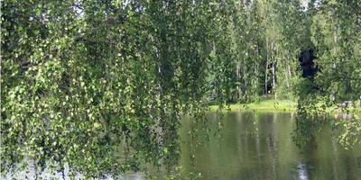 Фотографии и отзывы о коттеджном поселке «RedKlub» (Домодедовский р-н МО)
