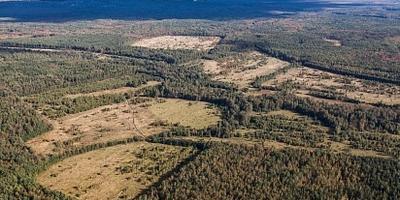 Фотографии и отзывы о коттеджном поселке «Подберезовик» (Всеволожский р-н ЛО)