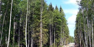 Фотографии и отзывы о коттеджном поселке «Forest Lake Club» (Наро-Фоминский р-н МО)
