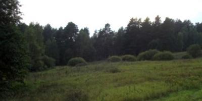 Фотографии и отзывы о коттеджном поселке «Сосны эксклюзив» (Заокский р-н Тульской области)